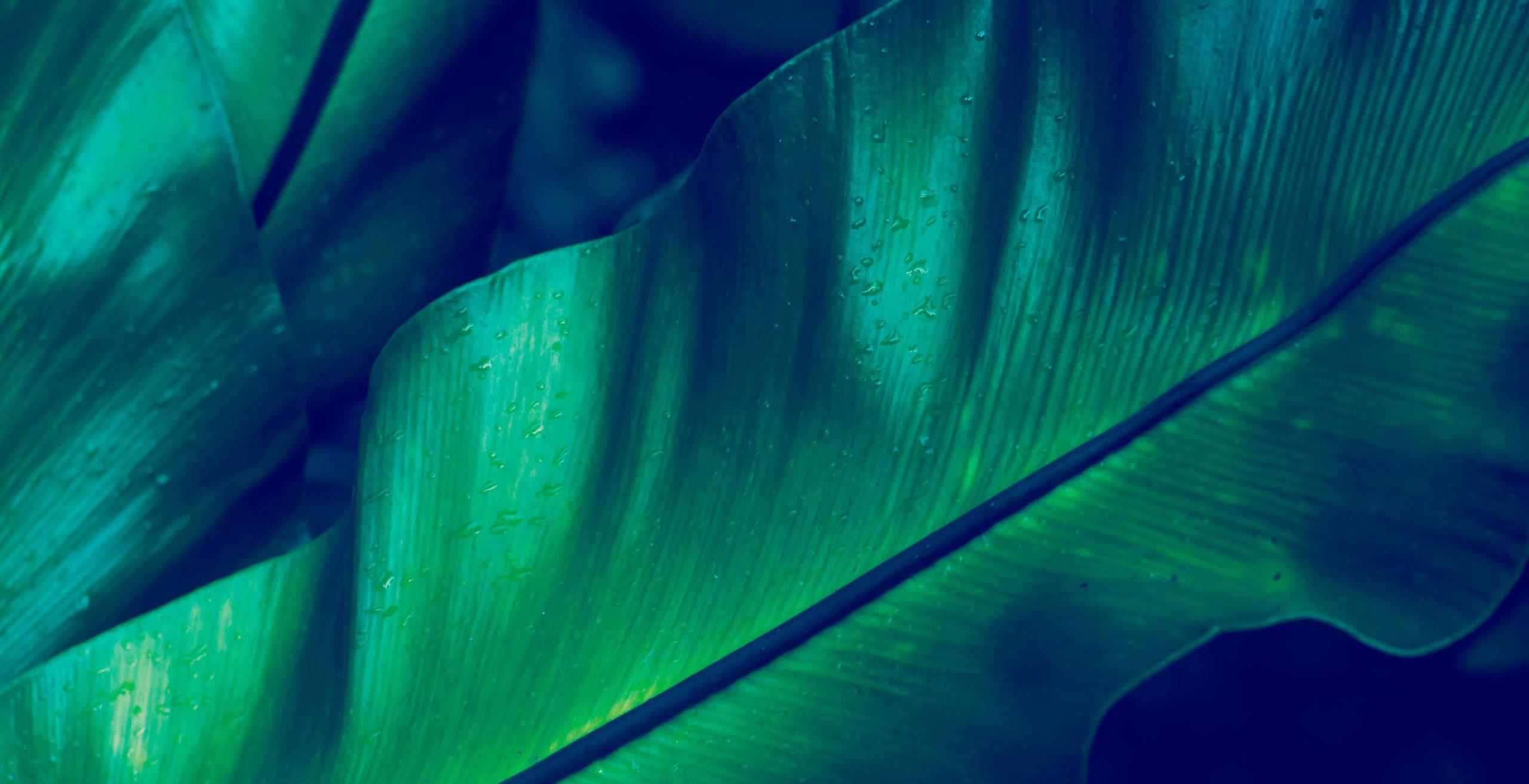 Leafy background image