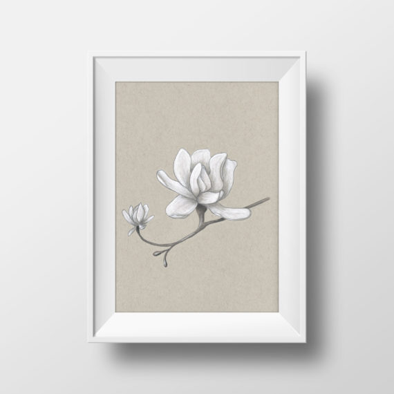 magnolia drawing on grey-toned paper